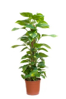 Zimmerpflanzen retten Leben: Wie ein indischer Geschäftsmann saubere ...